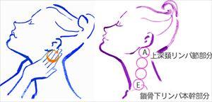 画像引用:http://www.wellba.com/dlm/contents/images/base1s.jpg